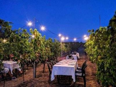 Cena in Vigna - Langhe e Monferrato